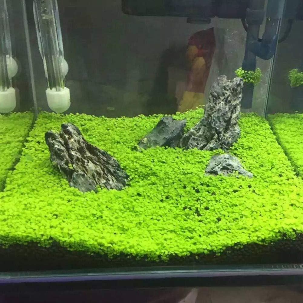 Fish Tank Aquarium Plant Seeds Aquatics Green Leaves Carpet Water Grass Decor hudiemm0B Aquarium Plant Seeds