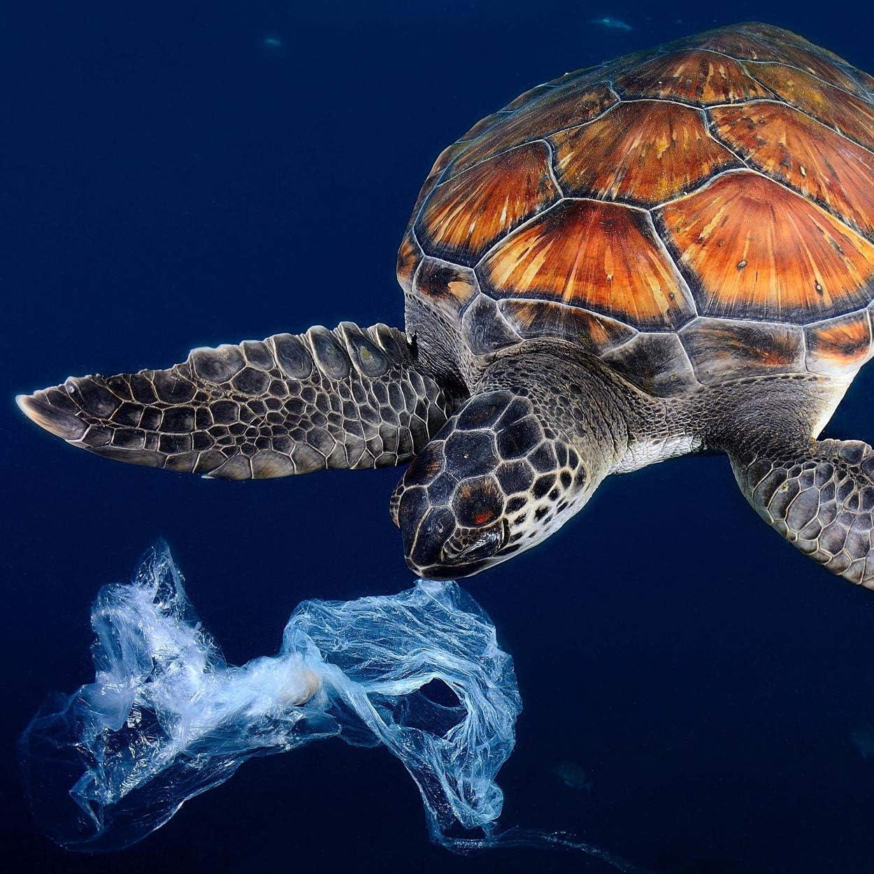 Ocean Upcycling Fainton P.A.C