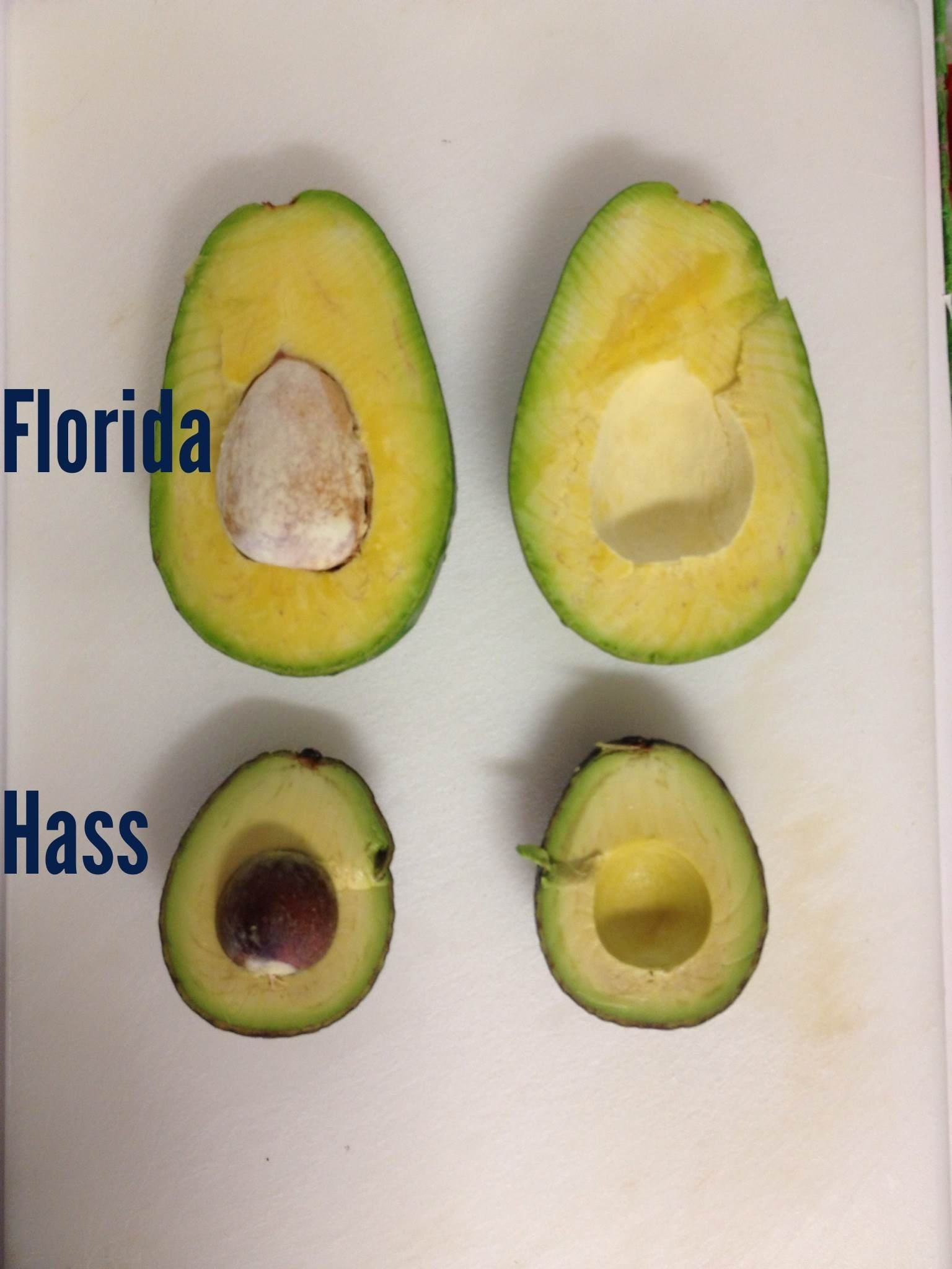 Avocado – Sunset Groves – Farm to Table – Picked Fresh – 4 Count by Sunset Groves (Image #5)