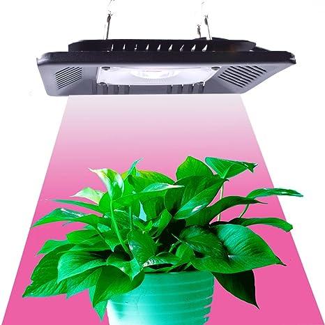 Full Spectrum LED Grow Light 1000 Watt/1200W for Indoor Plants Veg and Flower (