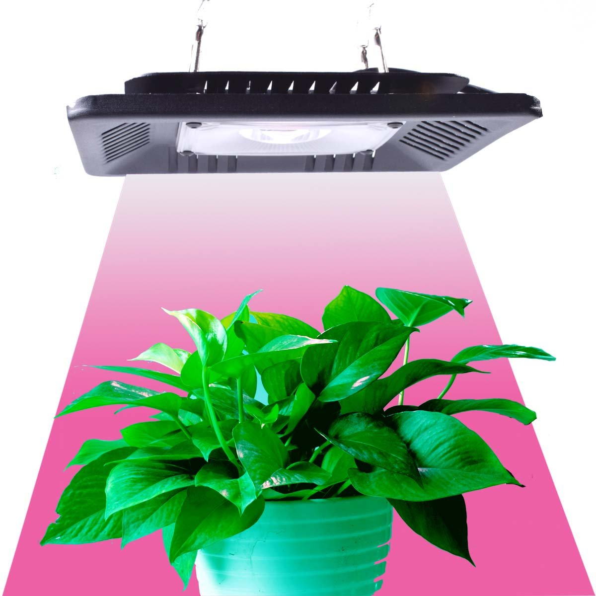100W LED Grow Light,Full Spectrum COB Grow Lights for Plant Veg and Flowering Replace Hps (T-100W)