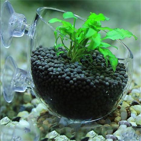 KATURN Vaso de Planta de Cristal – Soporte de Planta Acuario Tanque de Agua Plantas Acuáticas