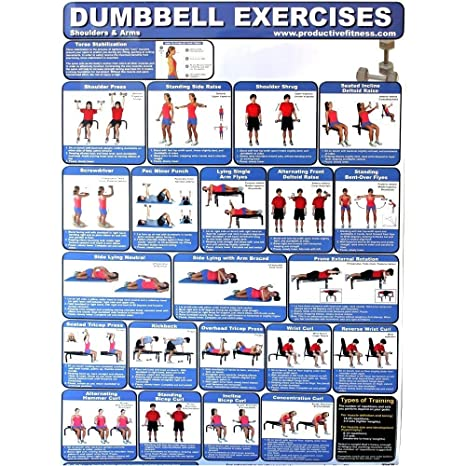 Amazon com : Laminated Poster Dumbbell Exercises for At Home Use