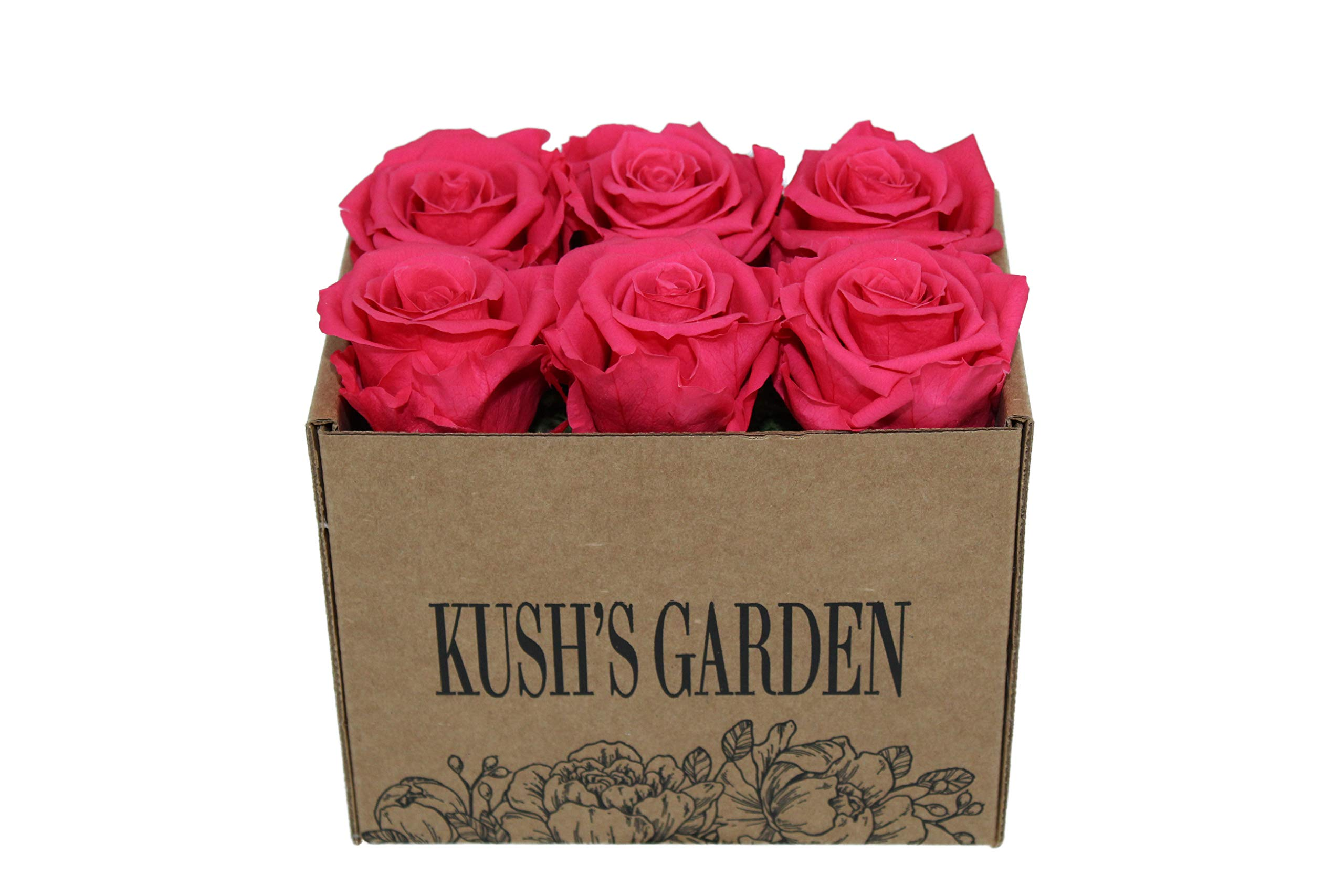 KUSHS GARDEN Real Preserved Roses in Box (Spicy Hot Pink) by KUSHS GARDEN