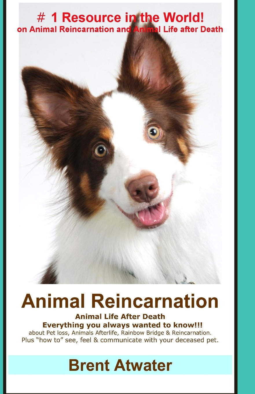 """Read Online Animal Reincarnation: Everything You Always Wanted to Know! about Pet Reincarnation plus """"how to"""" techniques to see, feel & communicate with your deceased pet pdf epub"""