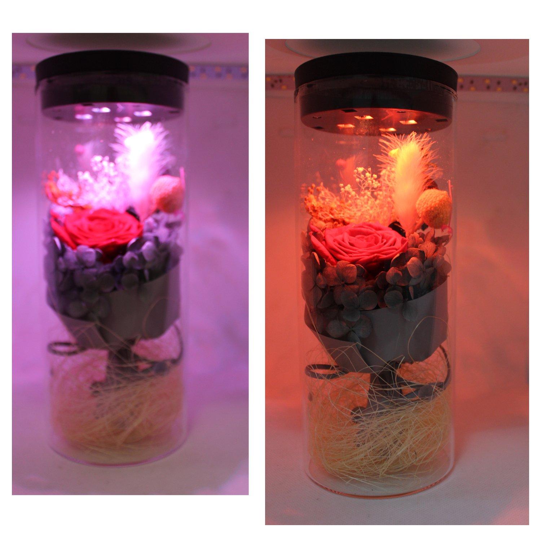 Flor eterna preservada fresco flor de cristal de la cubierta flores coloridas con la luz colorida del LED transforma, el mejor regalo para el día de San ...