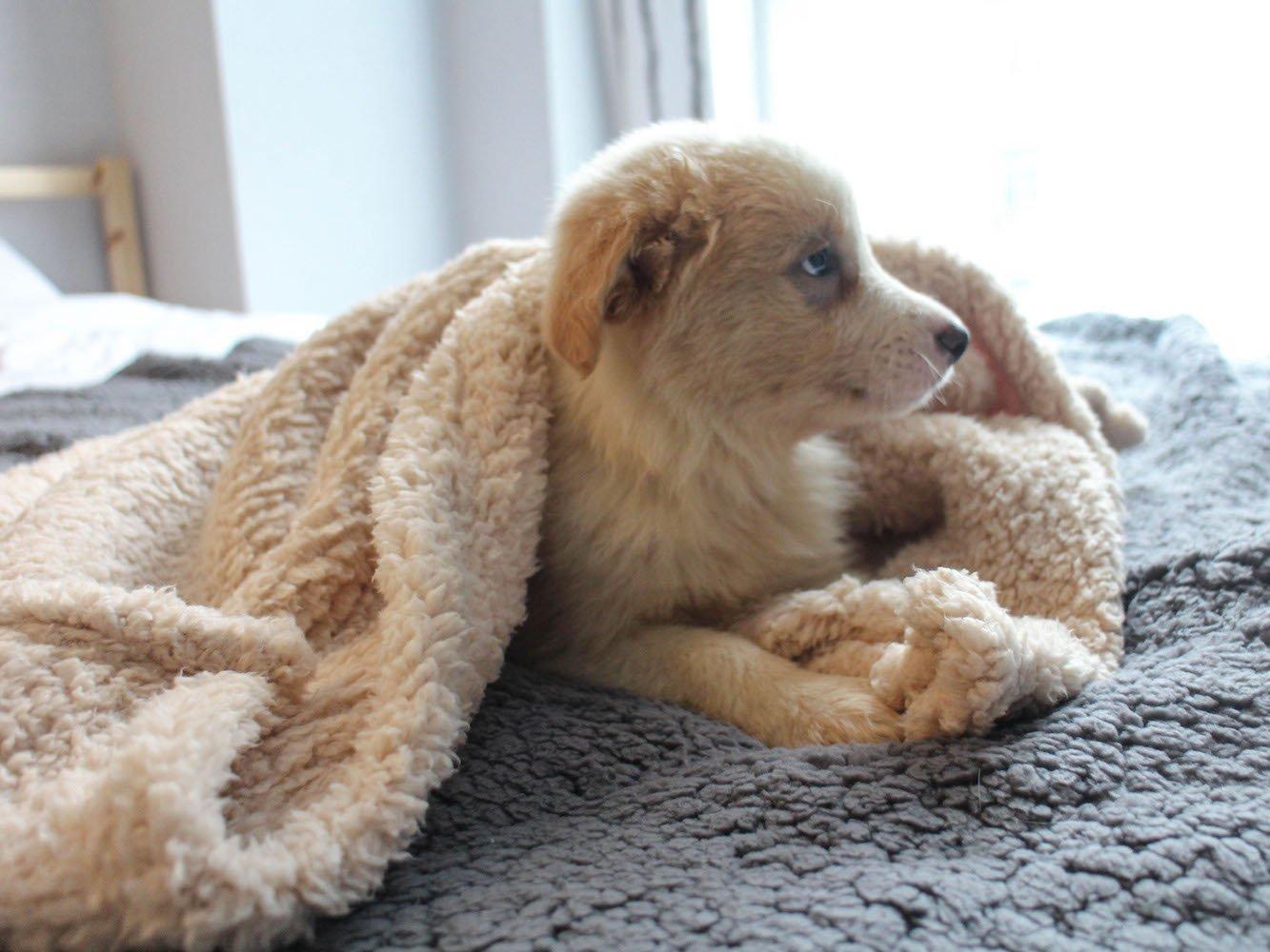 para Perros y Gatos Suave y c/álida furrybaby Manta de Forro Polar para Perro