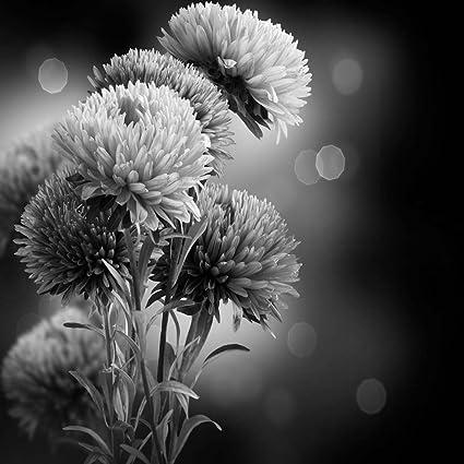 Amazon Black White Aster Flower Unframed Vinyl Art Print