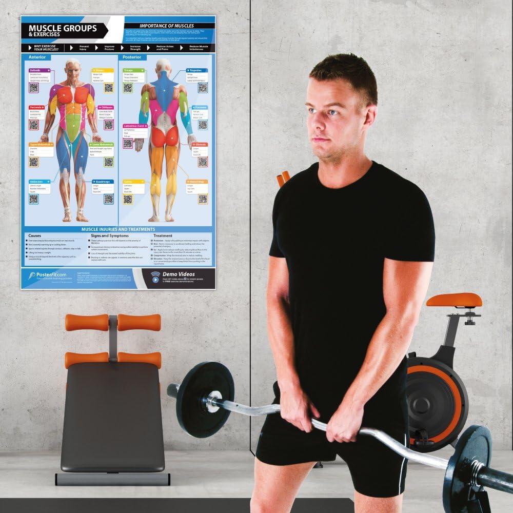 Póster con ejercicios y grupos musculares, formato A1, papel ...