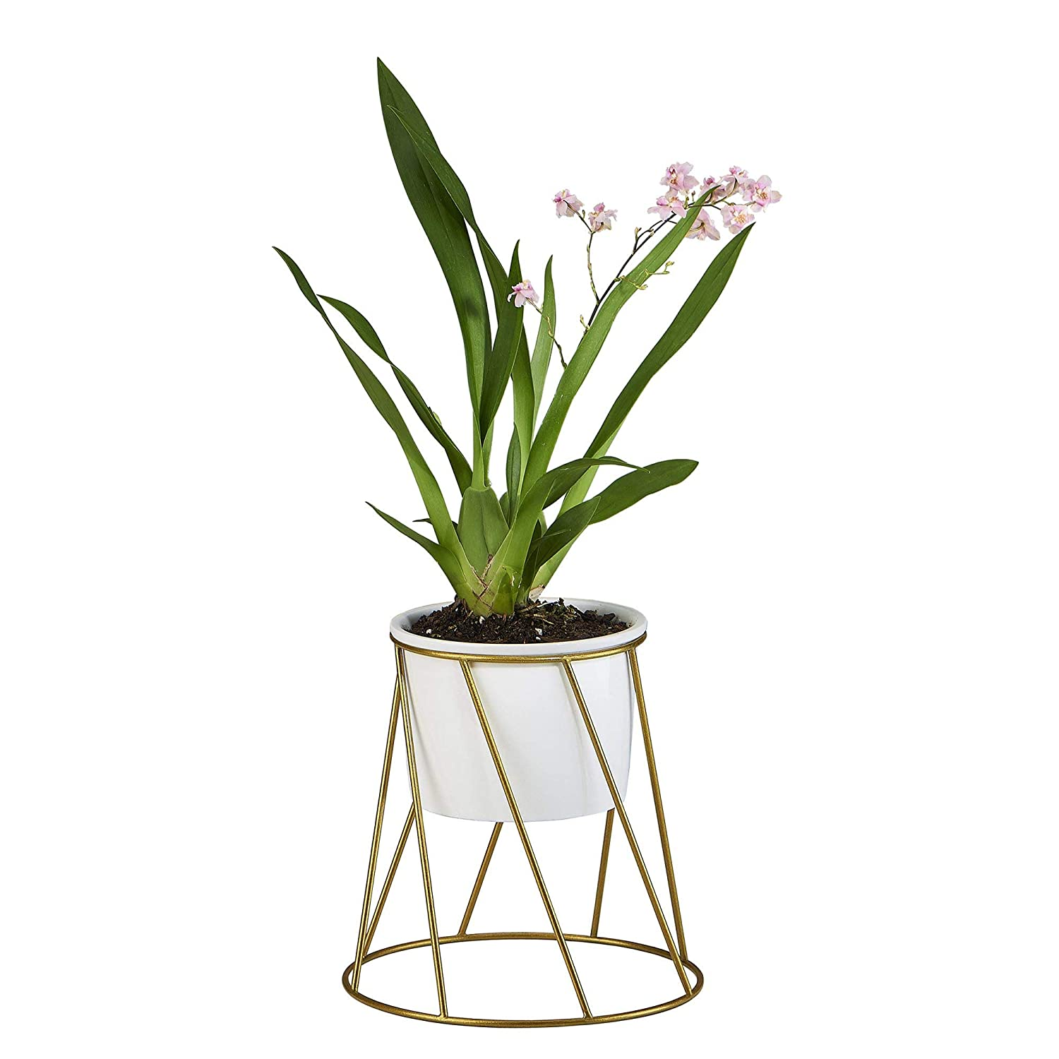 FLOWERPLUS Planter Pot Indoor, 4.33 Inch White Ceramic Medium Succulent Cactus Flower Plant Round Bowl with Metal Stand Holder and Plants Sign for Indoors Outdoor Home Garden Kitchen Decor Golden