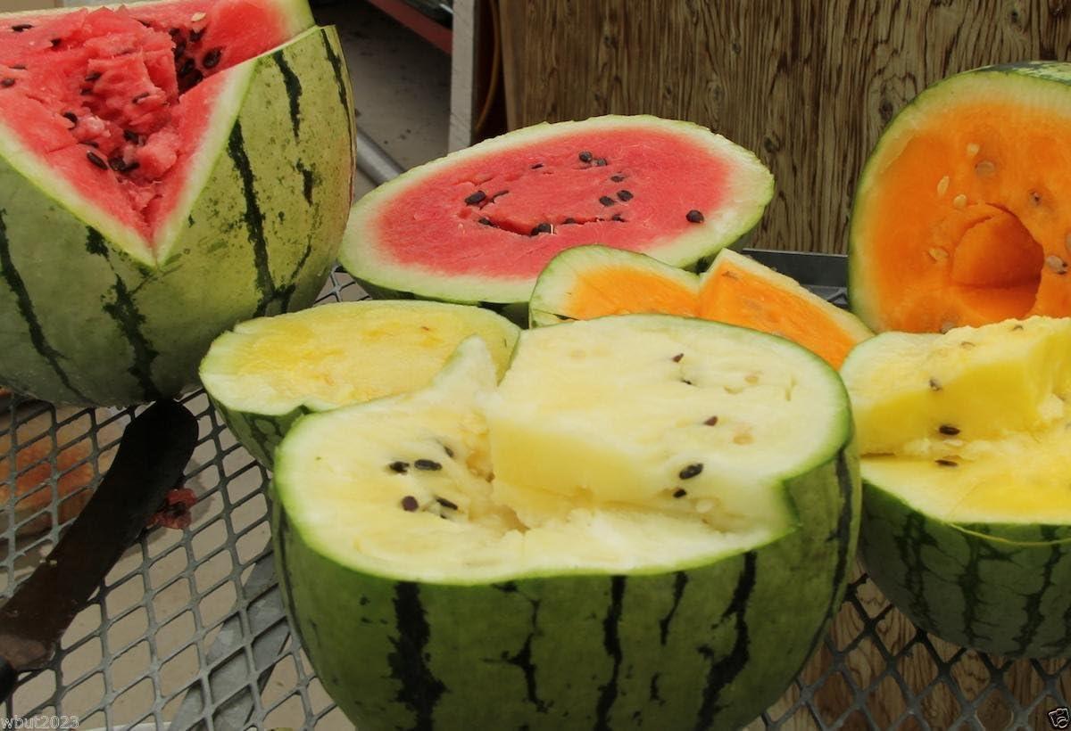 ¼oz to 4oz Heirloom Orange Flesh Garden Seeds Tendersweet Watermelon Seed