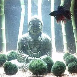 Nobby Buda Decorativo para Acuario, 15,5 x 9,6 x 15,4 cm: Amazon.es ...