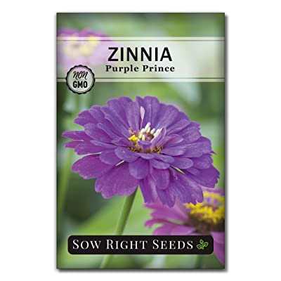 Sow Right Seeds Purple Prince Zinnia Seeds - Full Instructions for Planting, Beautiful to Plant in Your Flower Garden; Non-GMO Heirloom Seeds; Wonderful Gardening Gifts (1) : Garden & Outdoor