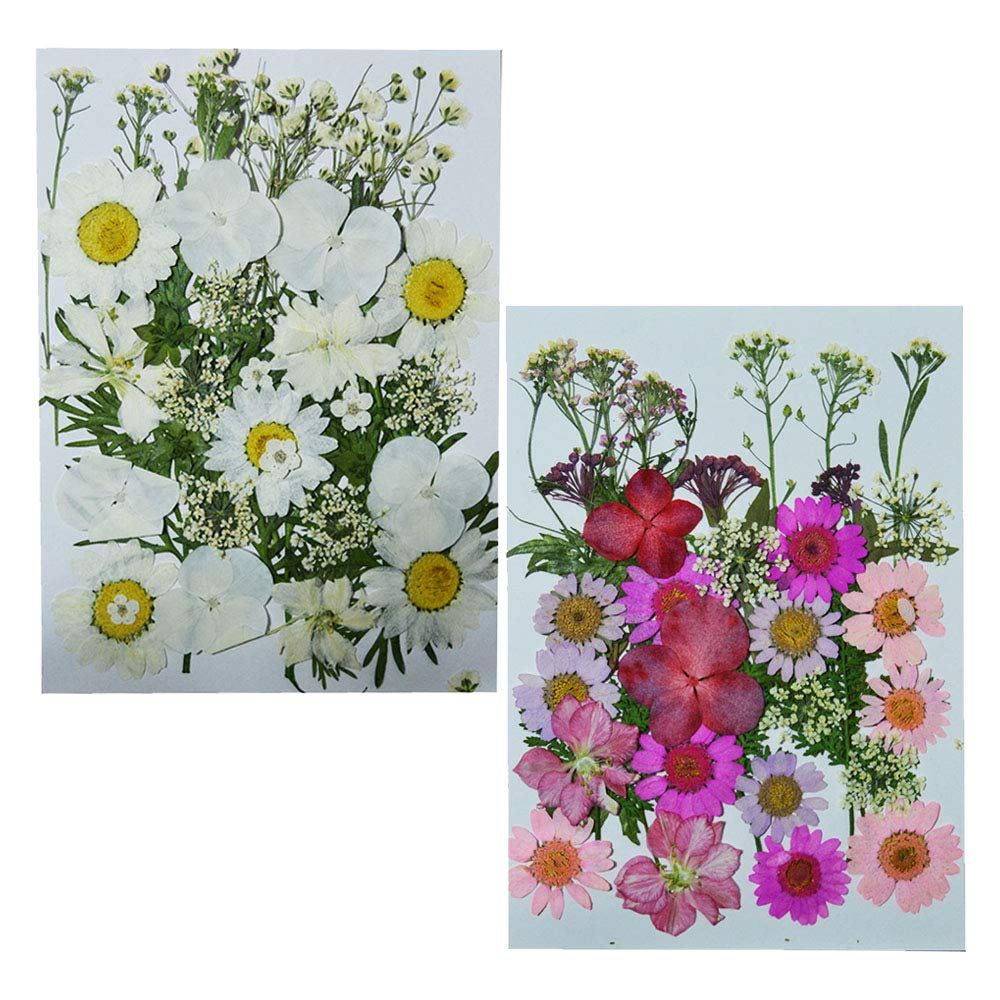 Uokwiwi Real Dried Pressed Flowers Assorted Colorful Daisies Leaves Hydrangeas for Art Craft DIY - 2 Pack Size 1