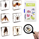 ELifeBox 6 PCS Insect Specimen Set, Spider/Scorpion/Huechys Sanguinea/Flower Chafers/Cicada/Spotted Lanternfly Resin Collection Science Toys