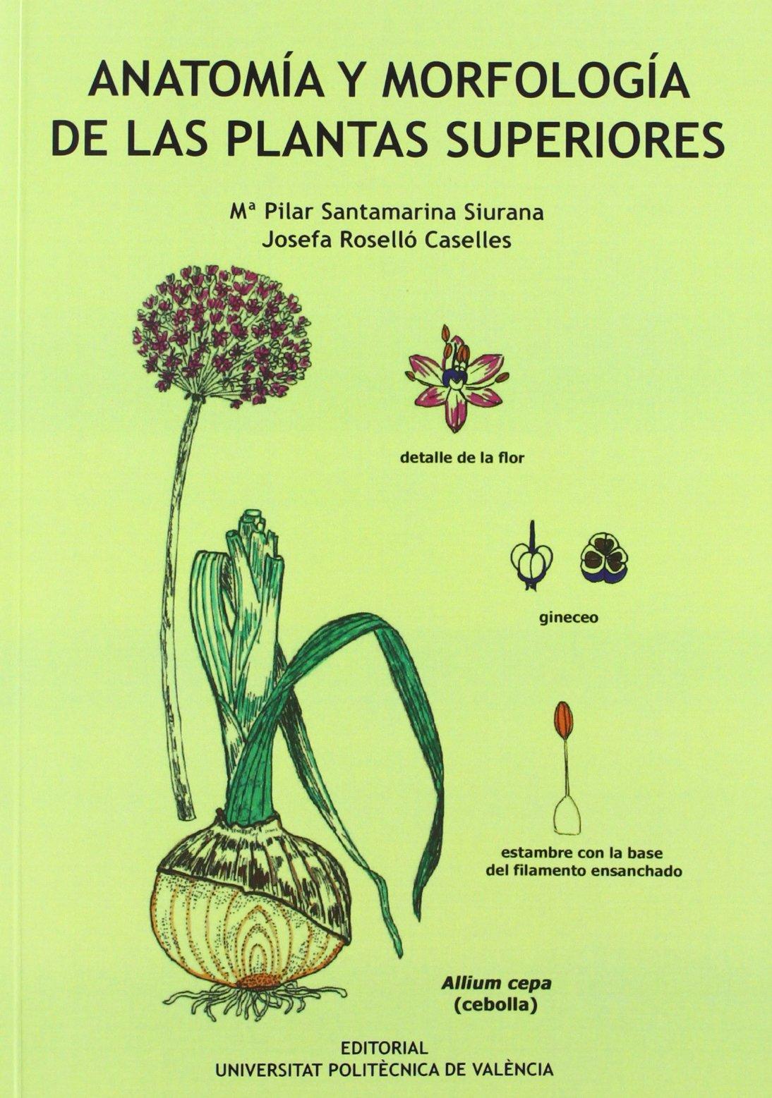 ANATOMÍA Y MORFOLOGÍA DE LAS PLANTAS SUPERIORES: 9788483637906 ...