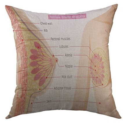 Amazon.com: Mugod Pillow Case Cancer Cross Section of Female Breast ...