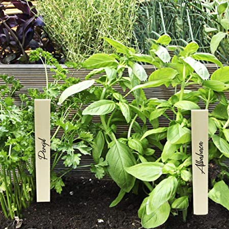 PrimeMatik - Estacas de Madera de 20cm para etiquetar Plantas. Kit ...