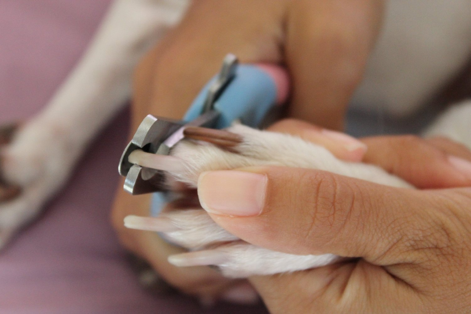 Amazon.com : Dog Nail Clippers - Get the Best Pet Nail Trimmers for ...