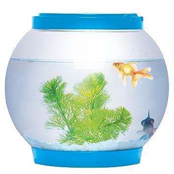 Pecera redonda de cristal, 5 litros, con iluminación LED, brillante, color azul, para escritorio, de la marca Sentik: Amazon.es: Productos para mascotas