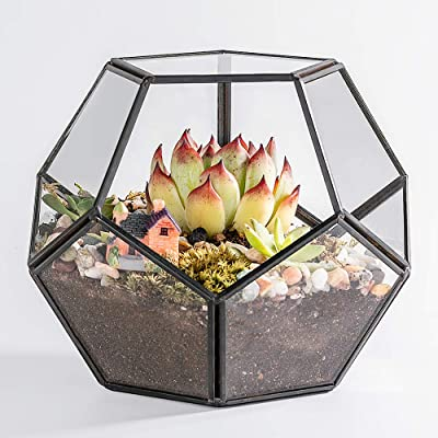 Newitty Geometric Pentagon Glass Plant Terrarium for Succulent Air Plants Moss Fern, Black (NWT-005): Garden & Outdoor