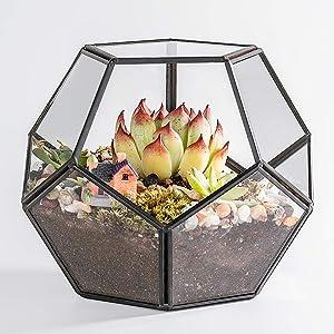 Newitty Geometric Pentagon Glass Plant Terrarium for Succulent Air Plants Moss Fern, Black (NWT-005)