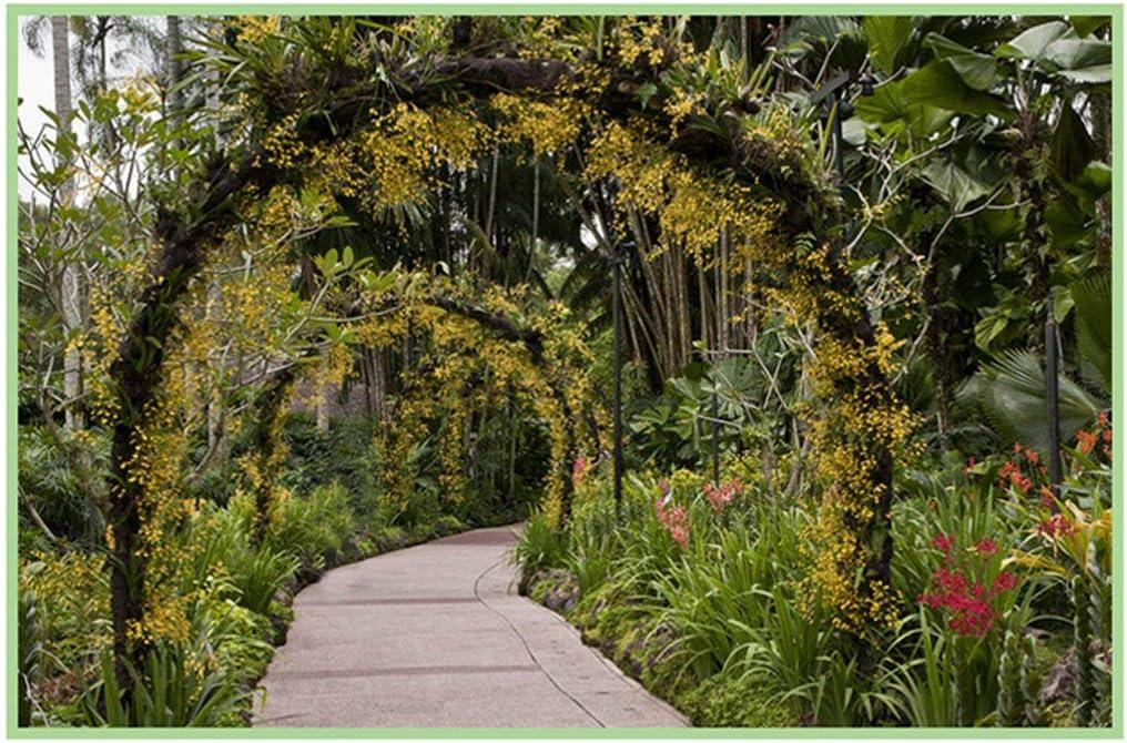 XLOO - Arco de Metal para jardín con macetas y Arcos de Metal Blanco para decoración de Bodas, Jardines, Bodas y Fiestas: Amazon.es: Jardín