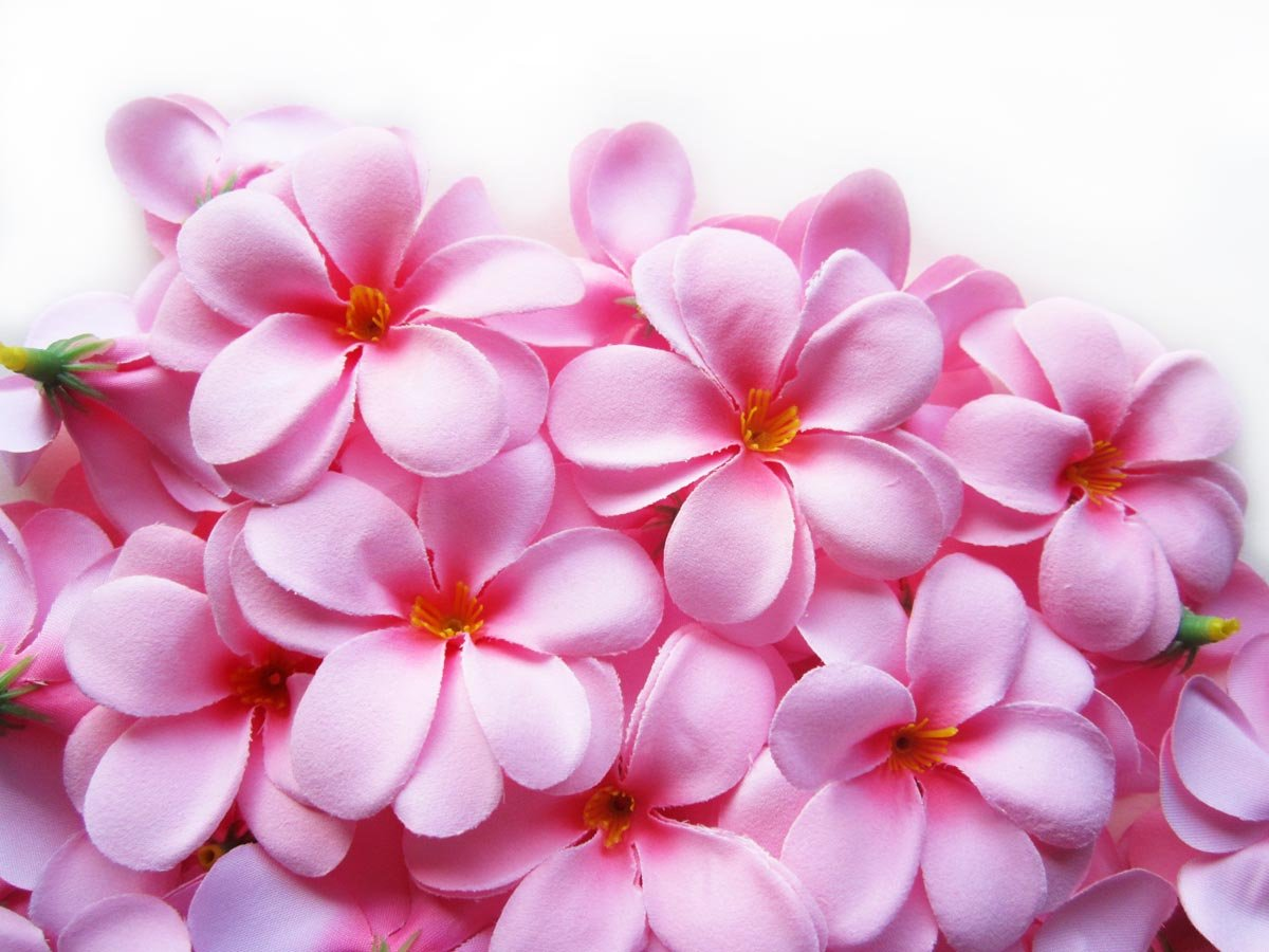100-Pink-Hawaiian-Plumeria-Frangipani-Silk-Flower-Heads-3-Artificial-Flowers-Head-Fabric-Floral-Supplies-Wholesale-Lot-for-Wedding-Flowers-Accessories-Make-Bridal-Hair-Clips-Headbands-Dress