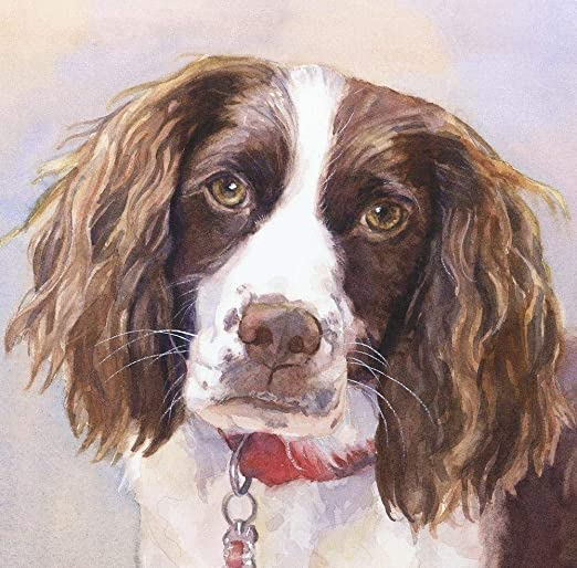 English Cocker Spaniel and Butterfly DIY Adult Painting by Digital Painting Digital Painting kit Canvas Gift for Beginners 40x50cm Frameless