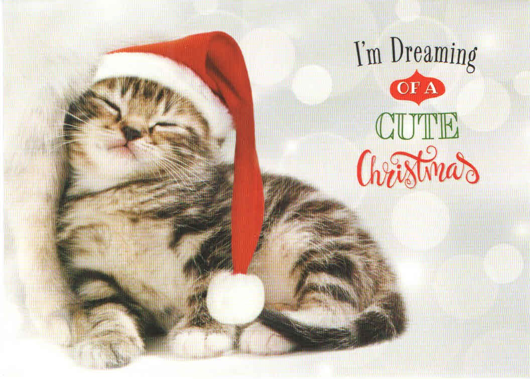 Amazon.com : Classic Christmas Card 9 Pack ~ Kitten, Dreaming of a ...