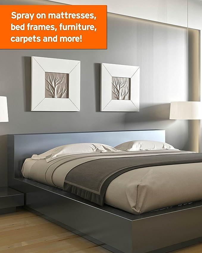 Do Carpet Beetles Live In Beds