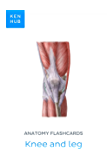Anatomy flashcards: Knee and leg: Learn all bones, ligaments and muscles on the go (Kenhub Flashcards Book 30)