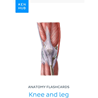 Anatomy flashcards: Knee and leg: Learn all bones, ligaments and muscles on the go (Kenhub Flashcards Book 30) (English…