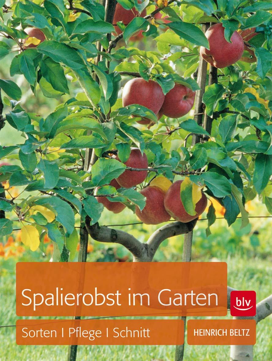 Spalierobst Im Garten Sorten Pflege Schnitt Amazon De Beltz