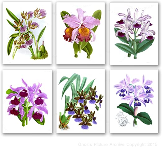 Framed Canvas Print Vintage Poster Flower Orchid Botanical Home Decor Pictures