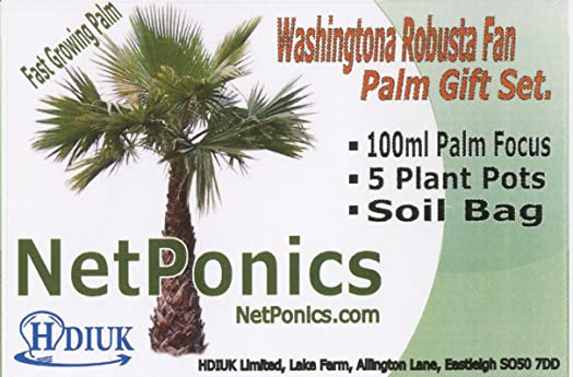 Grow your own Palm Trees Gift set. Fan Palm growing kit with ...