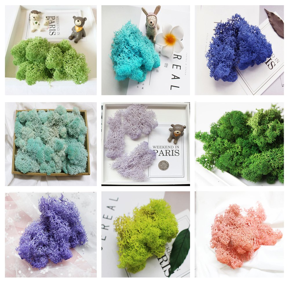 Bister 7.05oz Reindeer Moss Preserved 10 Assorted Colors for Fairy Gardens, Gift Packing, Dressing Potted Plants and more crafts