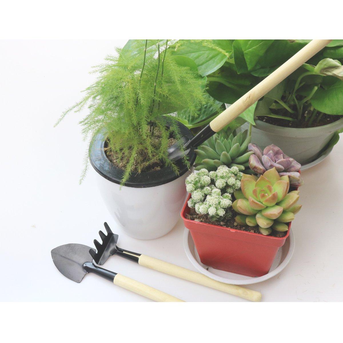 ZELAR MADE Bonsai Set 8 Pcs - Include Pruner,Fold Scissors,Mini Rake,Bud & Leaf Trimmer Set