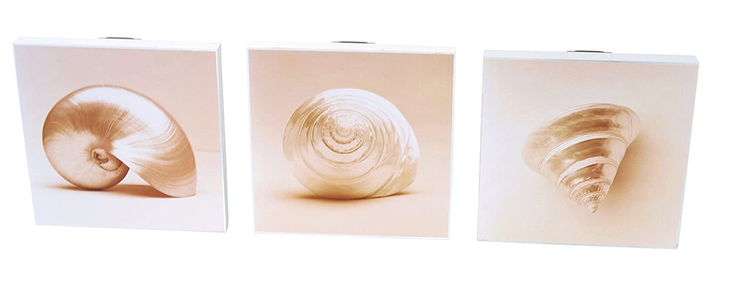 Graham & Brown. Trio of Sea Shell Prints on Wooden Mount ( 20 x 20 cm )