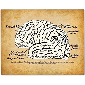 Amazon.com: The Human Brain Poster Series - 5 Poster Set. Brain ...