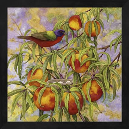 508551e6f53 Amazon.com  Painted Bunting   Peaches by Marcia Matcham Fine Art ...