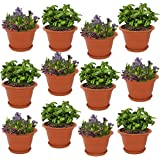 Meded Siti Plast Heavy Duty Plastic Planter Pots with Bottom Tray Color Terracotta (12 Inch, Pack of 12)