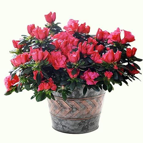 Amazon 2 pack flower pots metal galvanized garden decor 2 pack flower pots metal galvanized garden decor planters 9 inch indoor and outdoor mightylinksfo