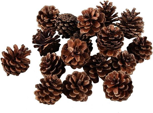 Conos de pino natural, ifoyo 20 piezas pequeñas piñas árbol de ...