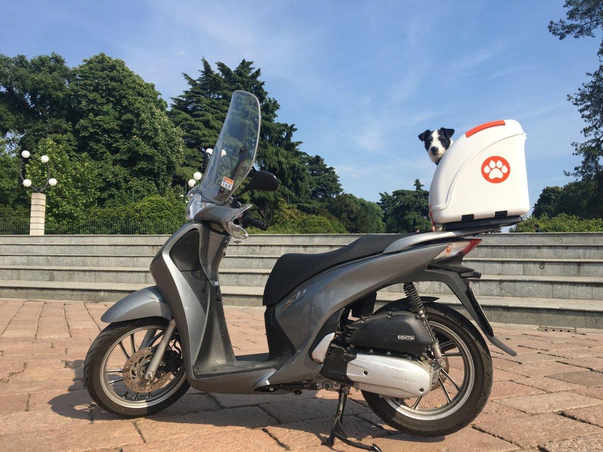 Taglia Unica Pow Pet on Wheels 8050534800012 Trasportino per Cani per Scooter Moto Bianco // Verde