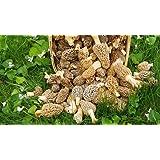 KCHEX Morel Mushroom Spores in Sawdust Bag Garden Mushrooms Spore Grow Kit Makes 5 gal