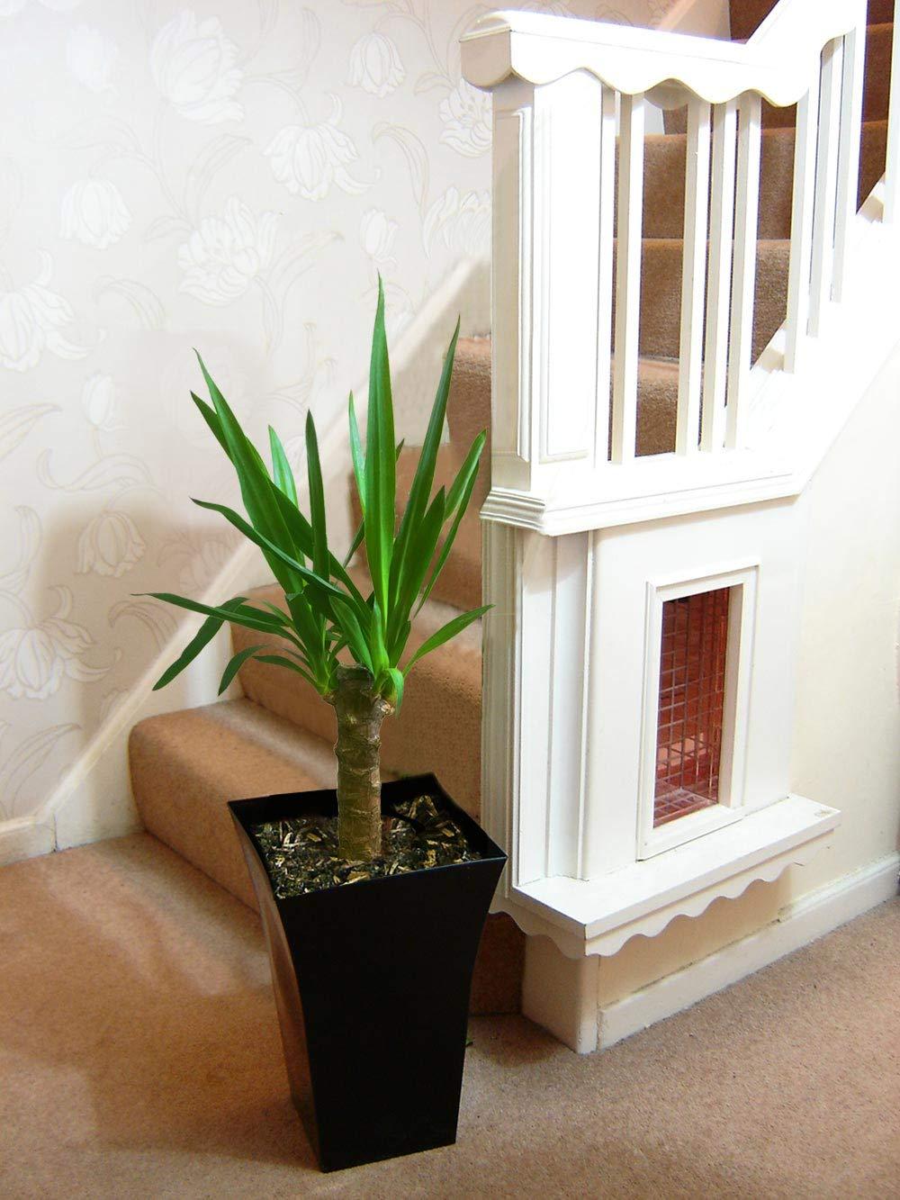 1 Evergreen Aloe Vera Natural House Indoor Office Plant Gloss White Milano Pot