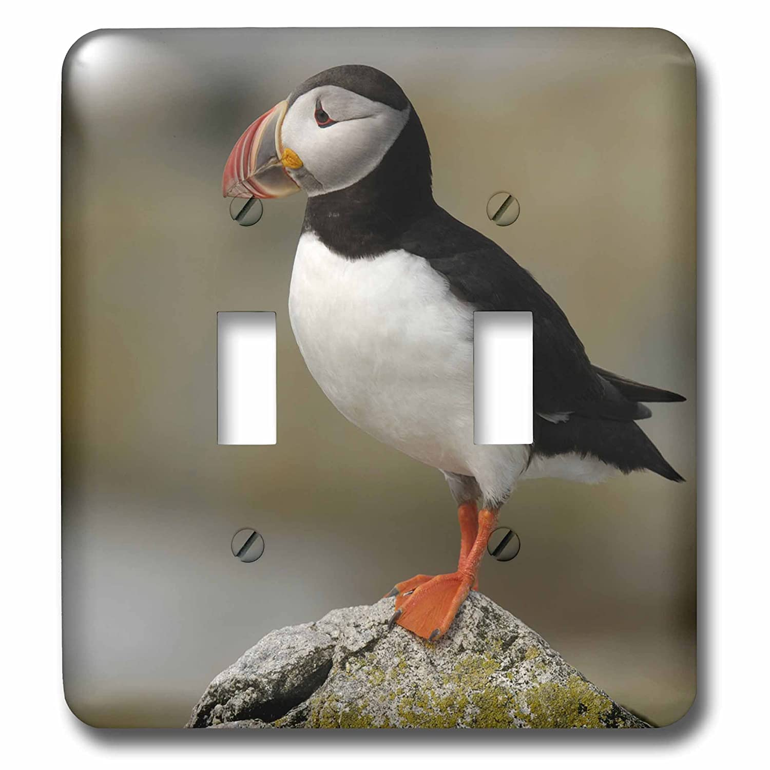 ME-US20 KRS0031-Keith and Rebecca Snell Double Toggle Switch Machias Seal Isl 3dRose LSP/_90746/_2 Atlantic Puffin Birds