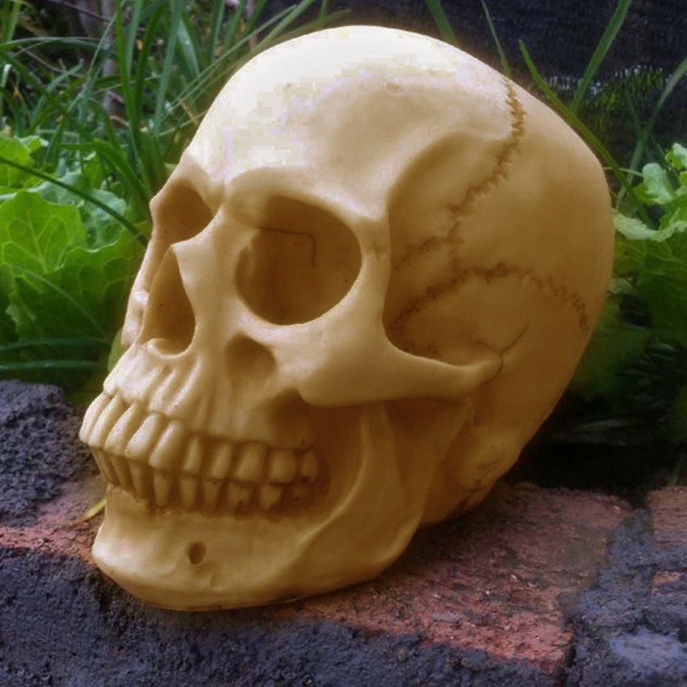 VORCOOL Bucky Skeleton Human Cr/âne Taille R/éelle Halloween