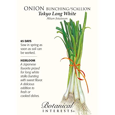 Onion Bunching / Scallion Tokyo Long White Seed: Toys & Games